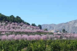 Blossom Parcent 1