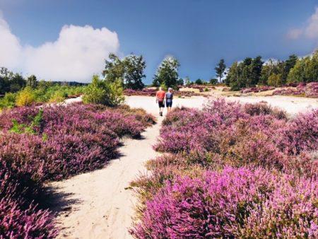 Wandelen in Nationaal Park Maasduinen
