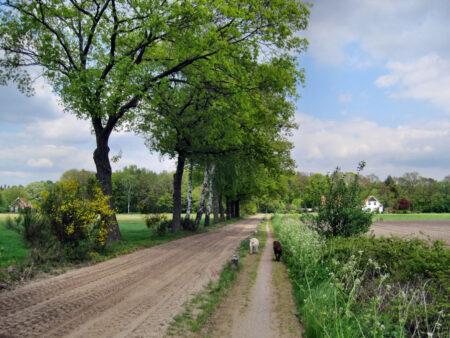 Scholtenpad Winterwijk 5 dagen wandelen in de Achterhoek